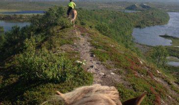 Horse ride Kittilä Lapland