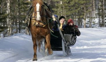 Horse Sleigh ride in the Snowy Forest