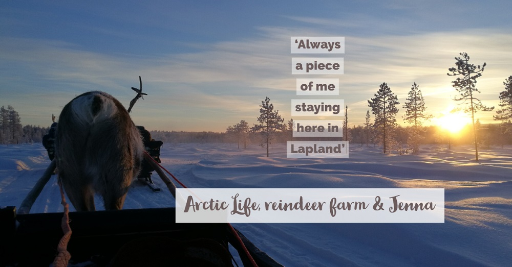 Jenna in a reindeer farm in Lapland Luosto with the reindeer in the sunny winter day
