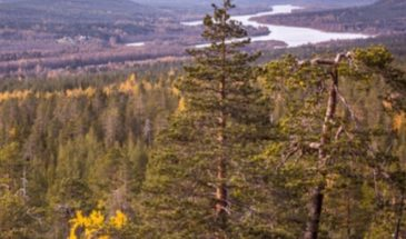 Photography Expedition to the Nature rovaniemi summer