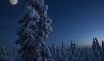 Sledge ride under the stars ruka kuusamo in the snowy forest