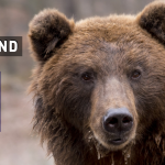 Global Wildlife Index 2019 Finland the best country to Visit in 2019
