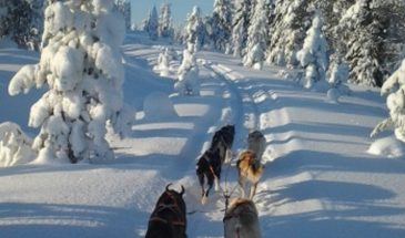 Path of the Gnome – Husky safari about 15–18 km- Kittilä- Finnish lapland Polar lights tours