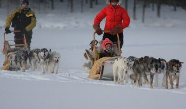 Roam with paws along Goblins trail - Husky safari with two overnights- Polar lights tours- kittilä- levi Lapland