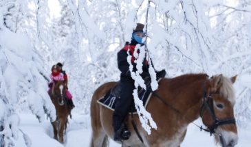 Steps on the snow - Nice trail ride in the pine forest in winter- Polar lights tours- kittilä- Visit Lapland