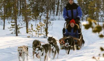 Thrill of Speed - 1 h husky safari- Rovaniemi- Safartica - Visit Lapland