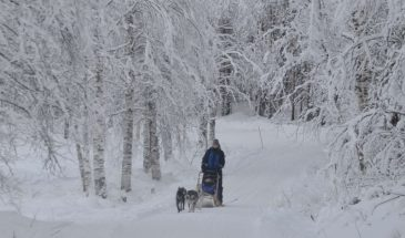 Visit a Husky Farm with 10KM Husky Sleigh Ride