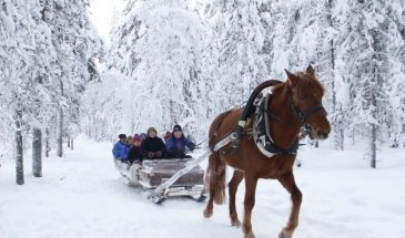 Winter fun - Horse and husky experience- Polar lights - Visit Lapland Kittilä