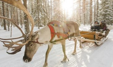 Santa Claus and Reindeer Experience by Snowmobile & Sleigh