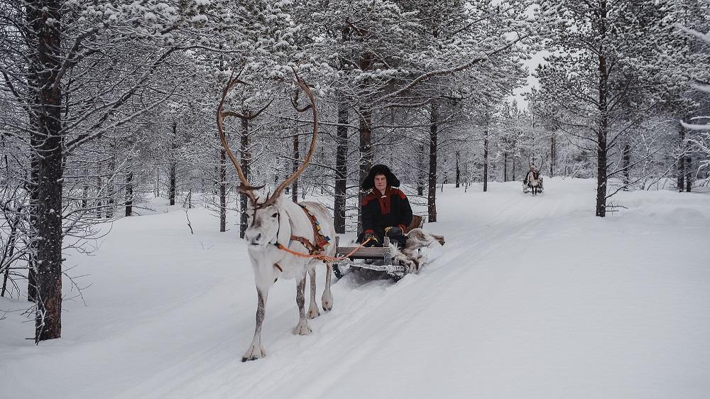 Local Lapland reindeer farm ride in Utsjoki Finland Winter dream Paishill lodge
