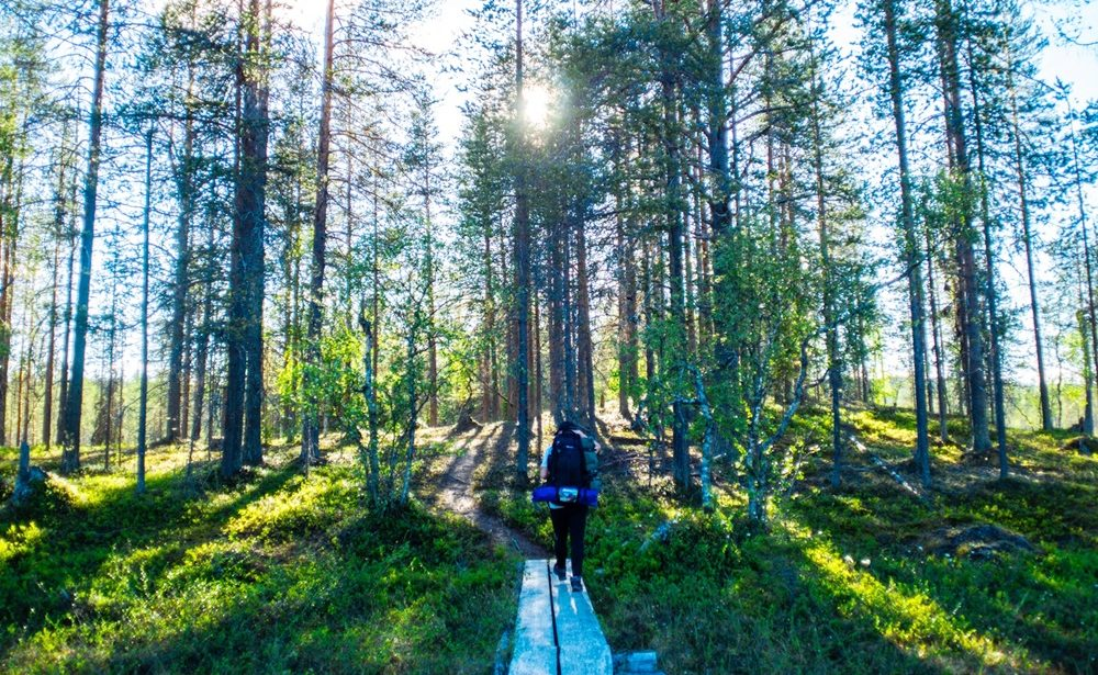 Hiking in a forest in Lapland