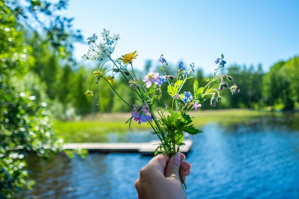 Traditional Finnish Midsummer flowers