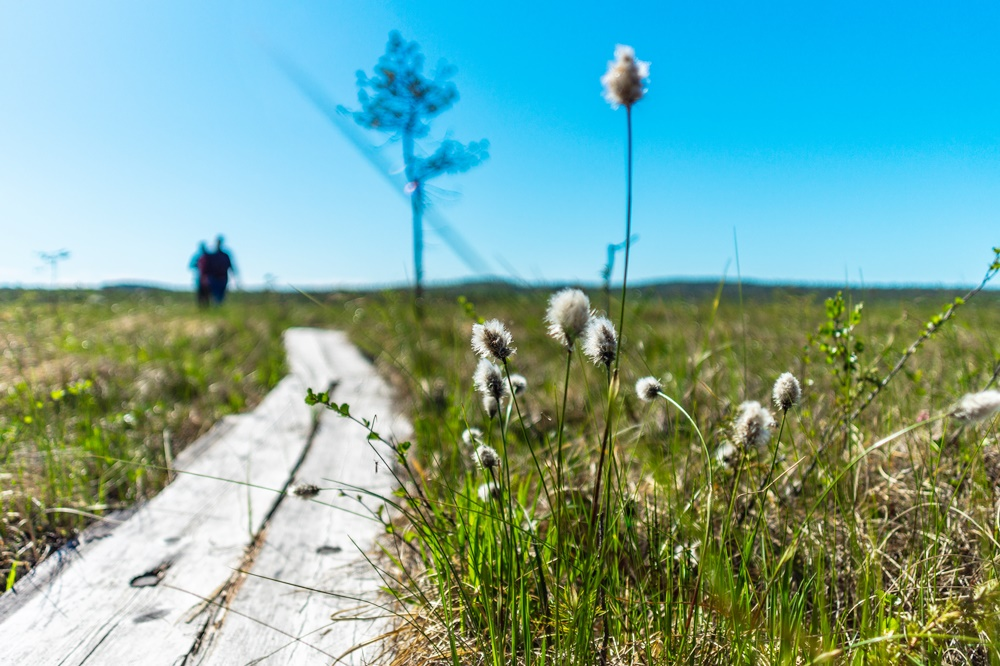 Wooden hiking path in Lapland during the summer