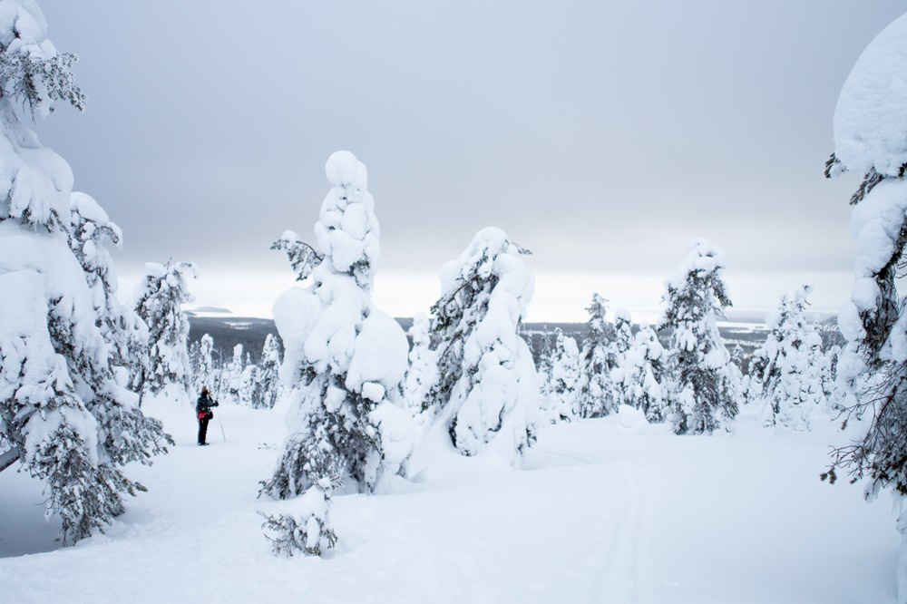 Winter in Riisitunturi National Park