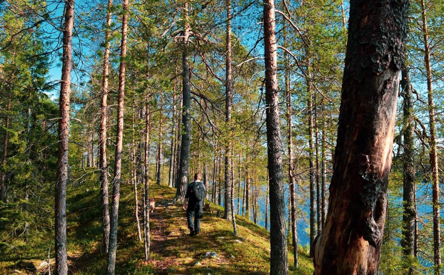 Konttijärvi Posio. Lakes on both sides of the path and no one nearby- Lapland, Finland summer Photo Hennariikka Parviainen