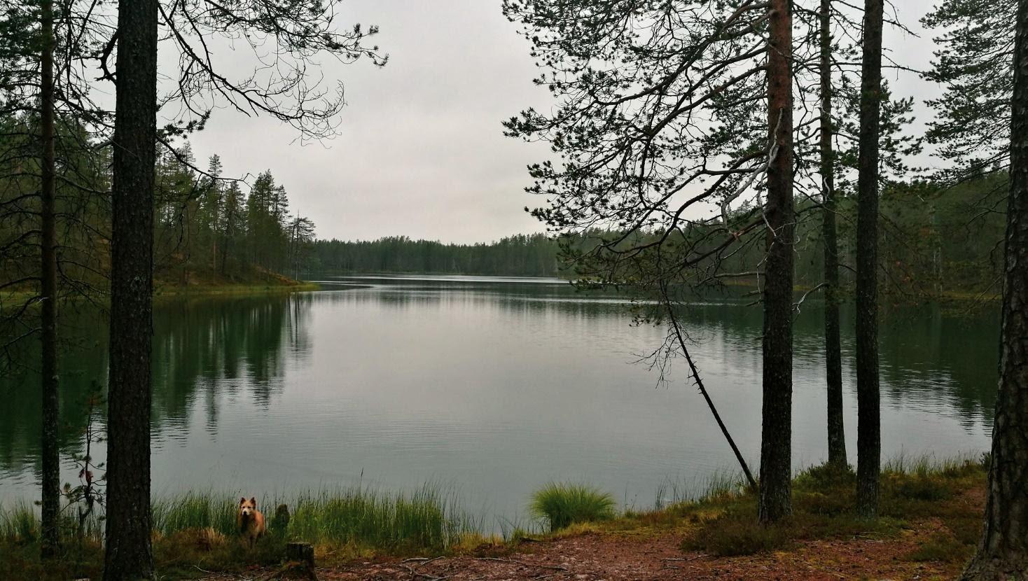 Kuulea Posio in Lapland, Finland during summer Spot the bestie! Photo by Hennariikka Parviainen