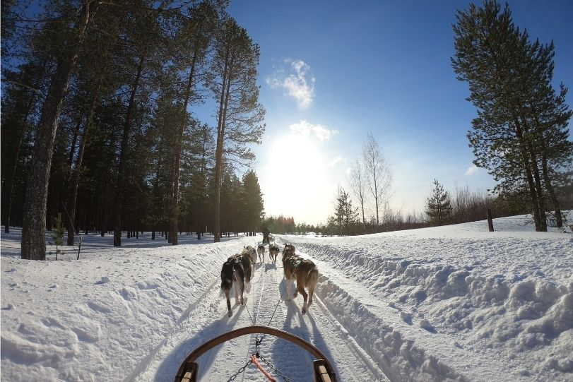 Lapland-Snow-Tourism-Winter-Seasonal-Husky-Sled