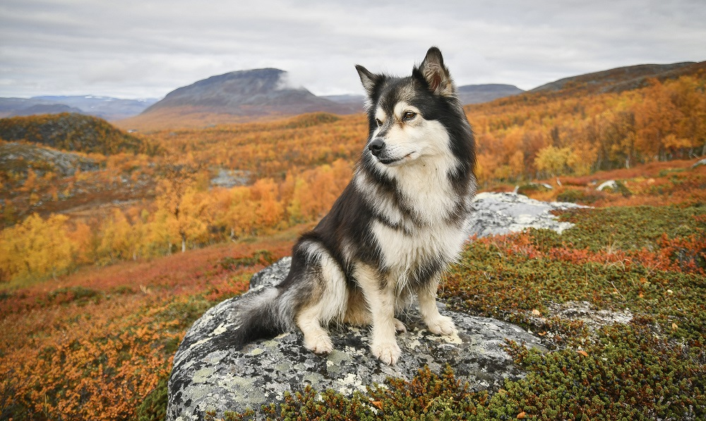 Tips no 8 the Autumn colors in Kilpisjärvi Lapland Finland by Suvi Mansikka