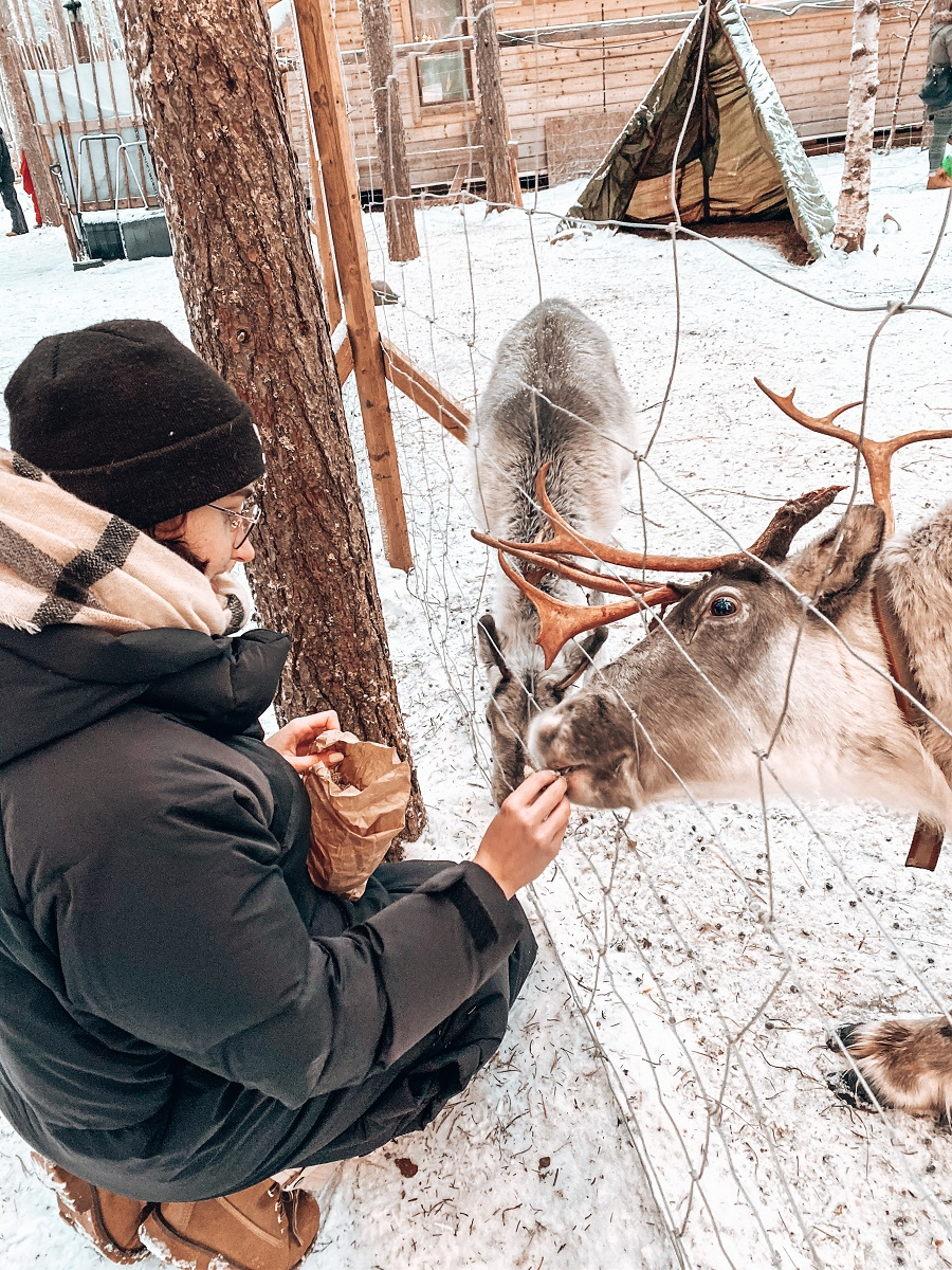 Visit A Reindeer rafm in Rovaniemi- Lapland By Ronja Talala
