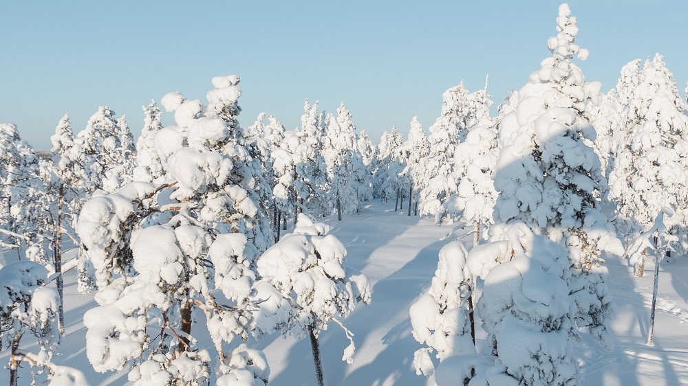 Magical view of Vikaköngäs hiking trail Rovaniemi Lapland